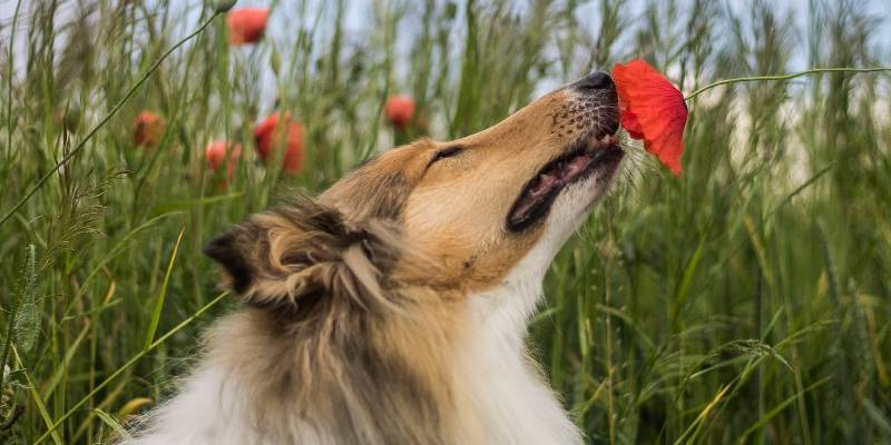 best behaved dogs