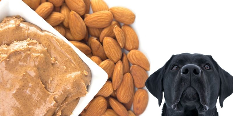 Can Dog Eat Almond?