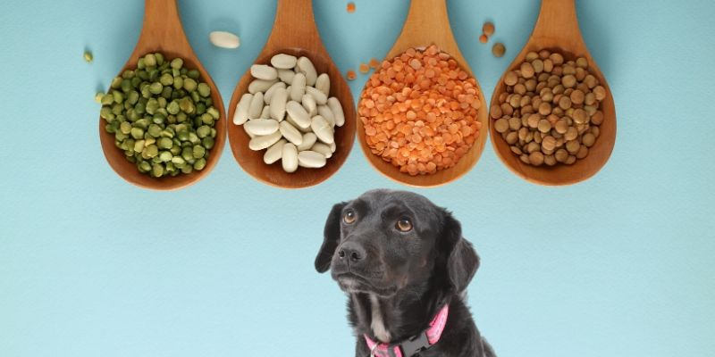 can dogs eat lentils