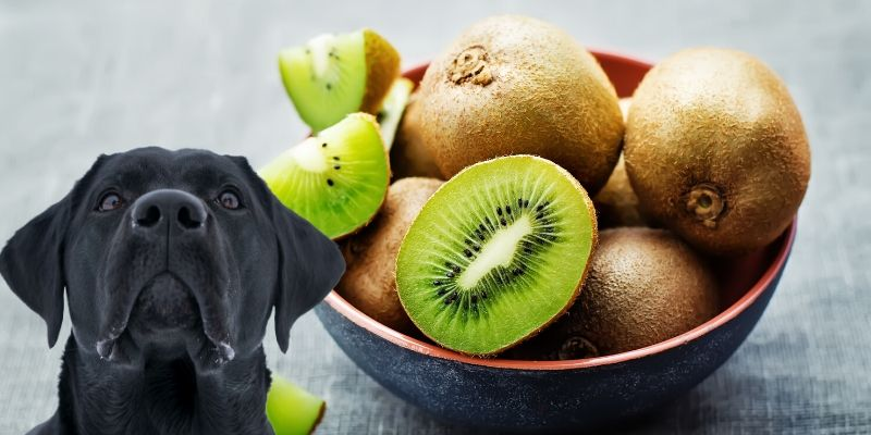 Can Dogs Eat Kiwi? (+ Safest Way to