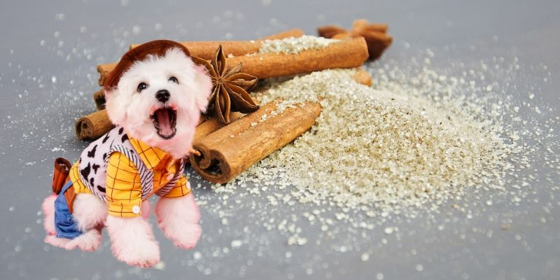 cinnamon for dogs