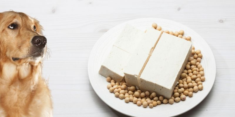 Can Dogs Eat Tofu? Here's the Full