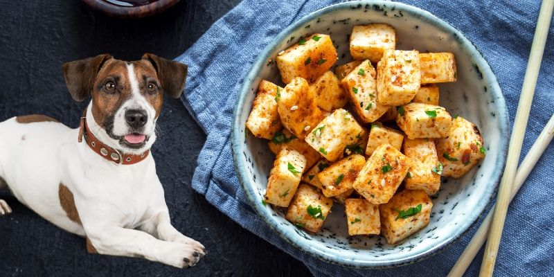 can dogs eat tofu