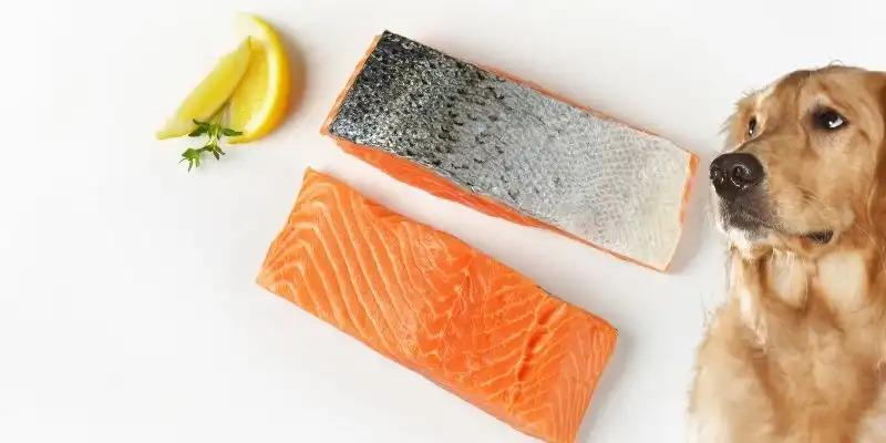 Can Dogs Eat Salmon Skin? (Cooked, Raw, or as Treats?)
