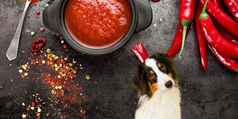 is hot sauce bad for dogs