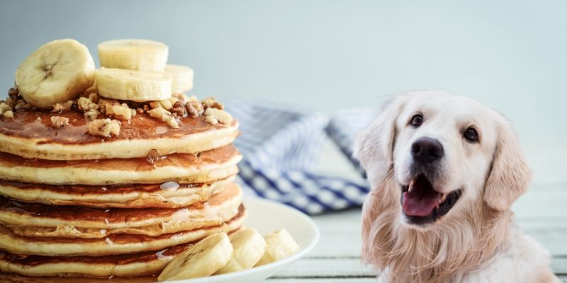 can dogs eat pancakes with maple syrup