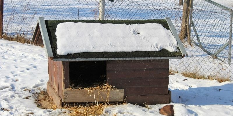 dog house in winder