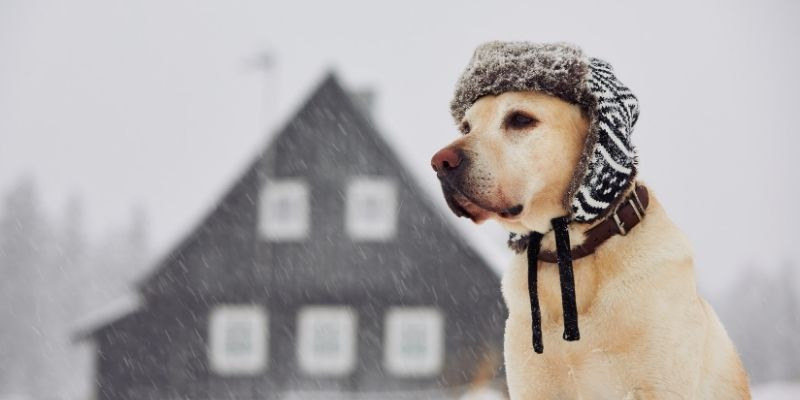 dog cold weather